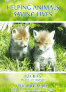 HELPING ANIMALS - SAVING LIVES. Fox Kits and The Infirmary