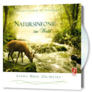 Symphony of Nature in the Forest