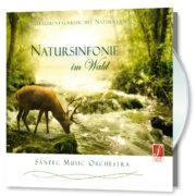 Sinfonia della natura nel bosco